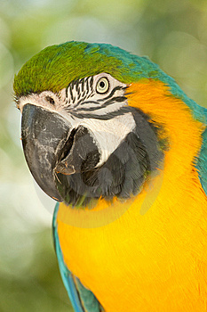 Macaw Parrot Royalty Free Stock Photo - Image: 14199805