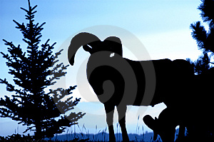 Rocky Mountain Bighorn Ram Silhouette Royalty Free Stock Image - Image: 1423336