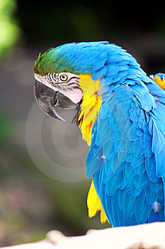 Colorful Macaw  Parrot Stock Image - Image: 14200441