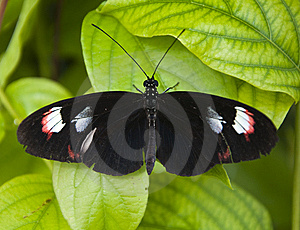 Small Black Butterfly Royalty Free Stock Image - Image: 14200506