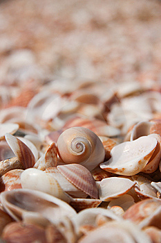Shells Stock Image - Image: 14201811