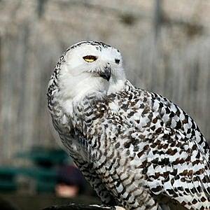 Bird Of Prey Stock Images - Image: 14203044