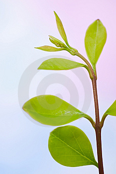 Fresh Plant Branch Royalty Free Stock Photos - Image: 14205208