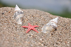 Sea Stars Between The Two Shells Royalty Free Stock Images - Image: 14207829