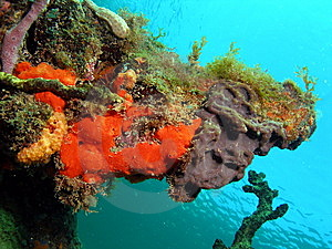 Coral Mound Stock Images - Image: 14208254
