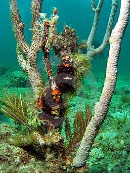 Damaged Coral Royalty Free Stock Photo - Image: 14208405