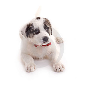 Seated Puppy Stock Photos - Image: 14213083