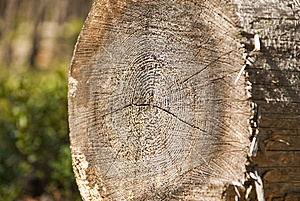 Core Of A Tree Stock Photos - Image: 14213283