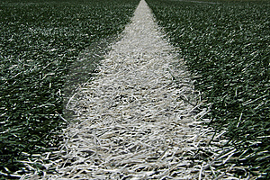 White Line Of Turf Stock Photography - Image: 14217852