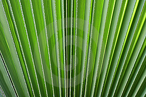 Branch Of A Palm Stock Images - Image: 14221284