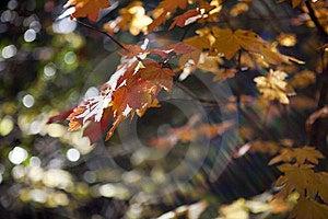 Autumn Leaves Stock Image - Image: 14222301