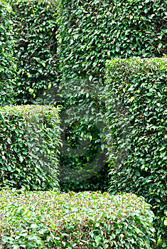 Pattern Composed By Garden Plant Stock Image - Image: 14223121