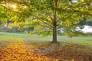 Autumn Sunset - Warms And Soothes Royalty Free Stock Images - Image: 14223699