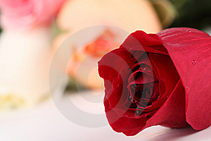 RedRose2 Royalty Free Stock Image - Image: 14227106