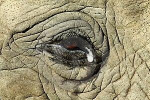 Elephant Eye Stock Photography - Image: 14228222