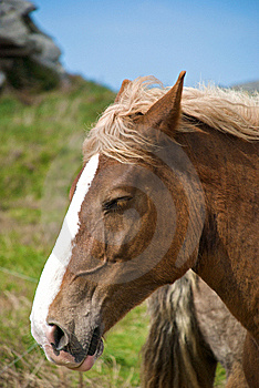Draft Horse Portrait Royalty Free Stock Photography - Image: 14228947