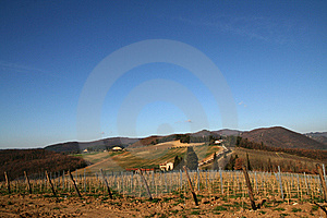 Tuscany Vineyard And  Landscape Royalty Free Stock Images - Image: 14229729