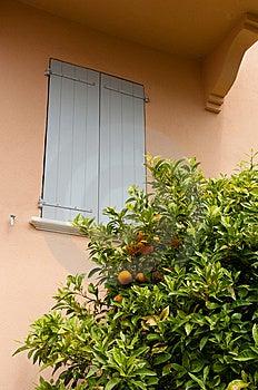 Orange Tree Royalty Free Stock Photo - Image: 14232695