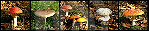 Wild Mushrooms Stock Photography - Image: 14236552