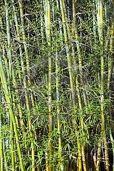Bamboo Stock Photos - Image: 14238433