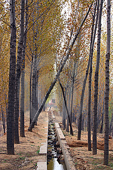 Poplar Woods Stock Photos - Image: 14246563