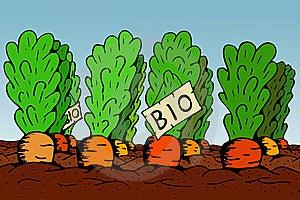 Bio Vegetable Stock Image - Image: 14252731