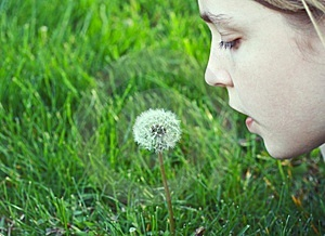 Girl About To Blow On A Dandelion Royalty Free Stock Image - Image: 14254026