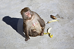 Monkey Looking For Distance Royalty Free Stock Photography - Image: 14255497
