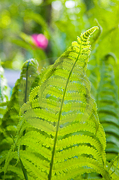 Green Fern Leaves Stock Photography - Image: 14256192