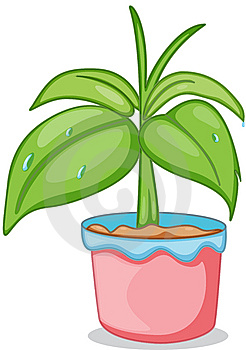 A Pot With A Plant Royalty Free Stock Photo - Image: 14256435