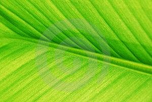 Banana Leaf Stock Photo - Image: 14267250