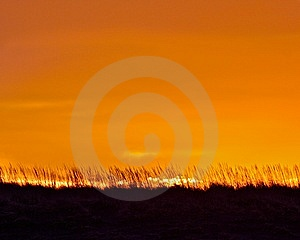 Sunrise And Sea Grass Royalty Free Stock Photography - Image: 14269497