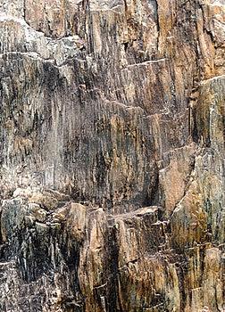 Imagem Abstrata Da Superfície De Madeira Fóssil Fotografia de Stock Royalty Free - Imagem: 14270997