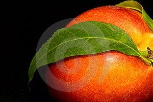 Nectarine Stock Image - Image: 14274921