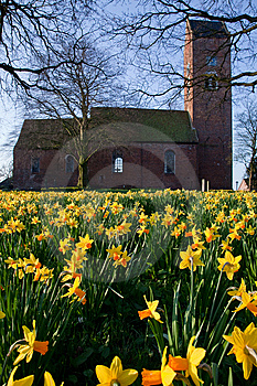 Field Of Narcissus Flowers With Church Royalty Free Stock Photos - Image: 14280118
