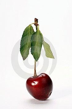 Ripe Cherry Stock Photo - Image: 14281230