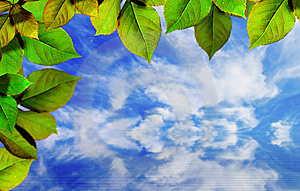 Bright Green Leaves On Blue Sky Royalty Free Stock Photos - Image: 14282048
