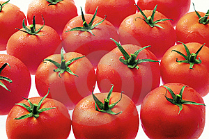 Tomatoes Galore Stock Image - Image: 14286831