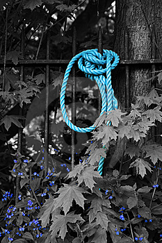 Blue Rope And Flowers In Black And White Royalty Free Stock Photo - Image: 14289775