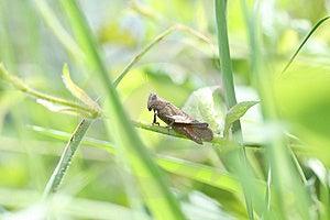 Grasshopper Stock Image - Image: 14294711