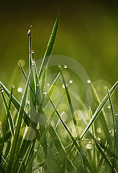 Green Grass With Drops In The Morning Stock Photography - Image: 14295852