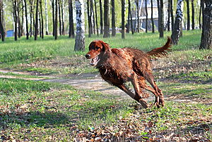 Happy Dog Plays On River Bank Royalty Free Stock Images - Image: 14296229