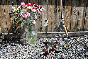 Stock Image Of Garden Tools With Carnations Royalty Free Stock Photo - Image: 14298055