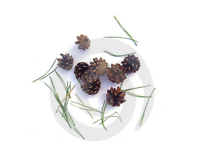 Fir Cones Stock Photo - Image: 14298540