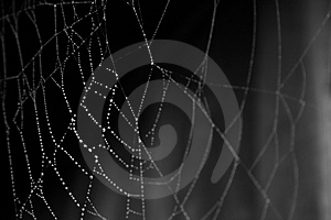 Spider Royalty Free Stock Photography - Image: 1432787
