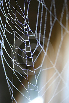 Spider Stock Images - Image: 1432914
