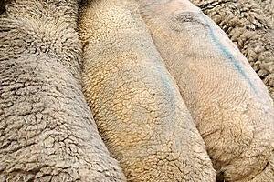Patagonia, Sheep Ranches Royalty Free Stock Image - Image: 14301386