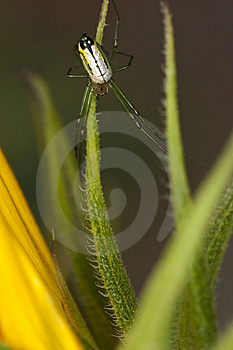 Spider Royalty Free Stock Images - Image: 14302589