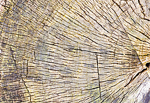 Tree Stump Background Or Texture Royalty Free Stock Photo - Image: 14304585