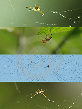 Banner Wild Stock Images - Image: 14306144